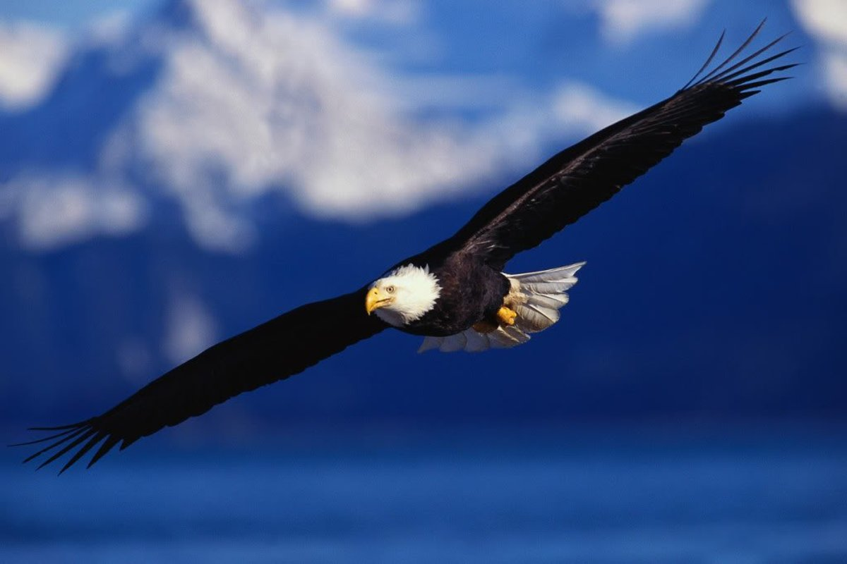 On the Wings of Eagles (an Inspirational Poem)