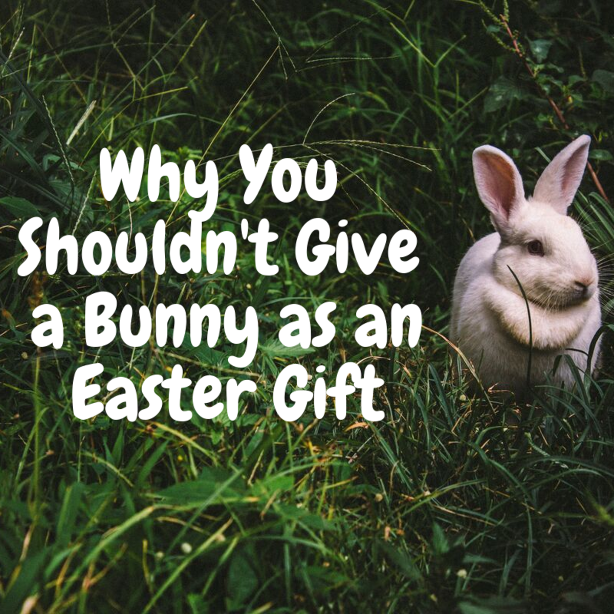 Live animals don't make very good gifts for children, so consider these reasons, this Easter, for why you shouldn't give a child a live rabbit as a gift.