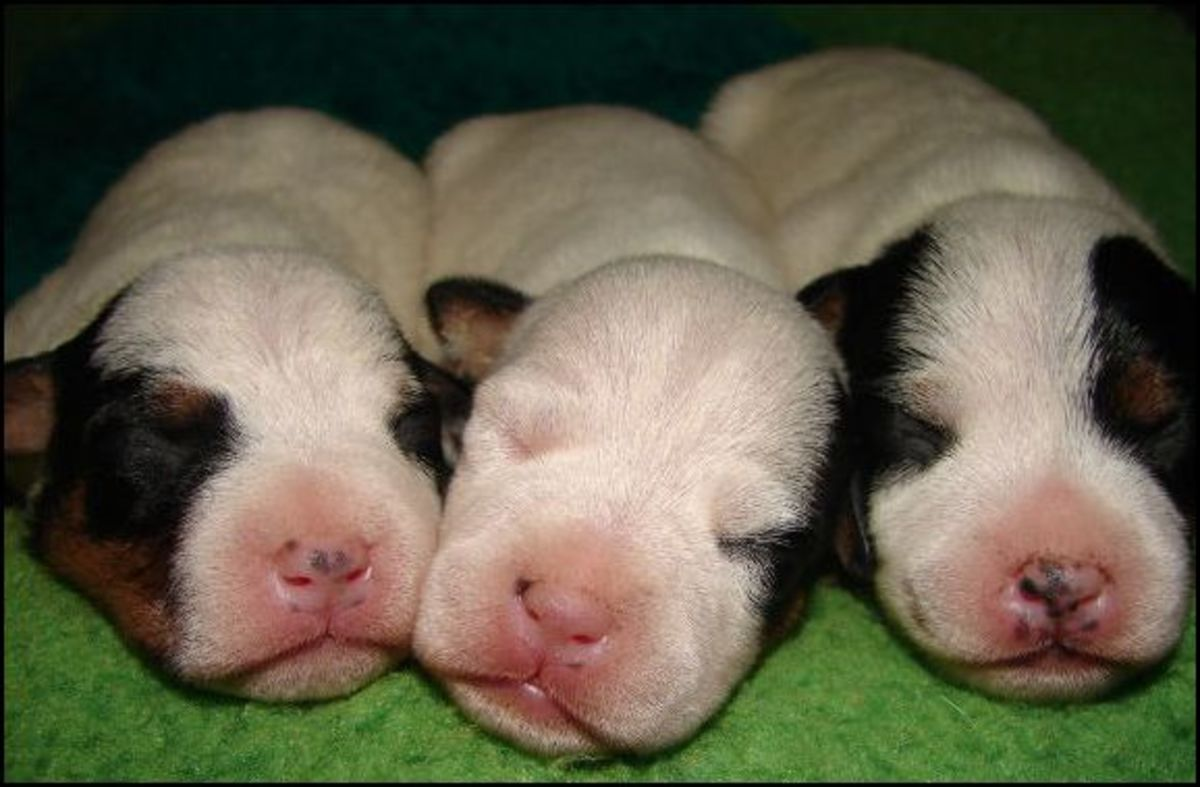 Why do puppies twitch in their sleep?