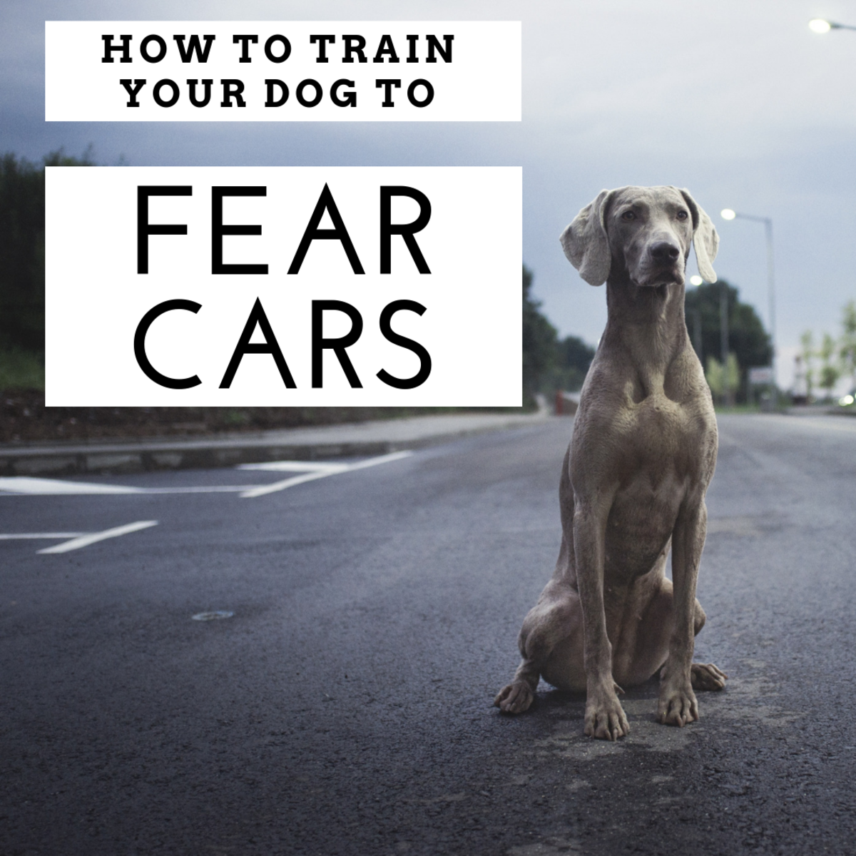 5 Easy Steps to Train a Dog to Avoid Cars