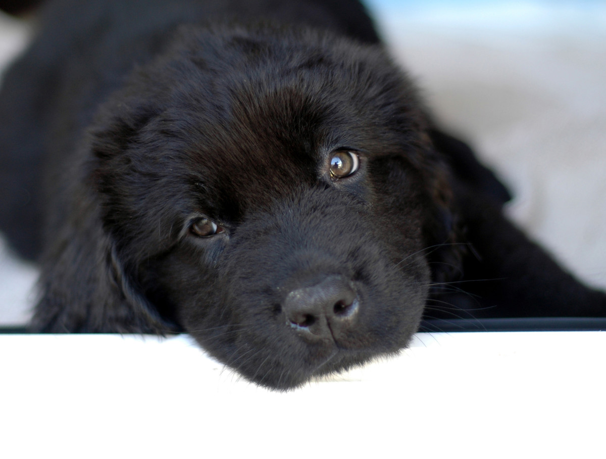 60 Names for Black Dogs: Male, Female, Badass, and Funny (From Astro to Velvet)