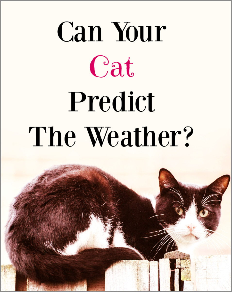 If your cats are acting strange, could they be reacting to an impending change in weather that you can't sense?