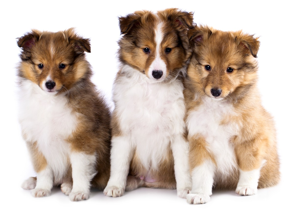 "The first dog who played Lassie wasn't actually named ""Lassie""! His real name was ""Pal."""
