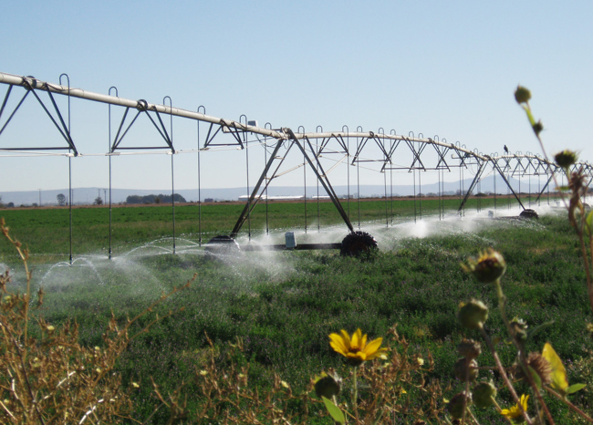 The most water efficient pivot systems are close to the ground, where water is sprayed directly on plants, rather than up higher, where it can blow off in the wind.