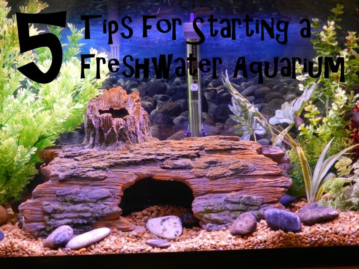 These 5 Tips for starting a freshwater aquarium will get your new tank on the road to success!