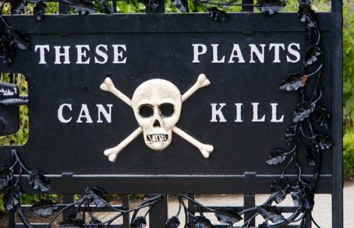 Top 10 Poisonous Plants