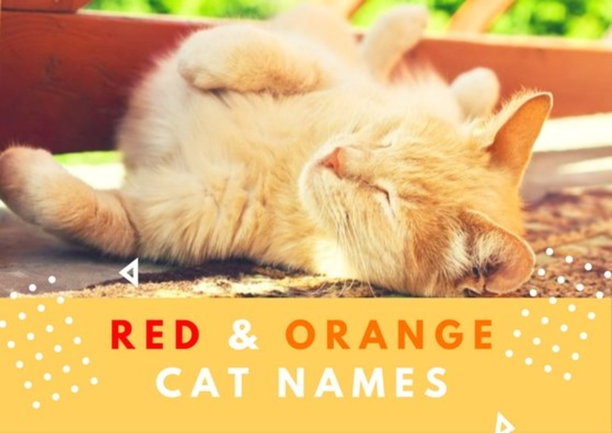60 Red and Orange Cat Names