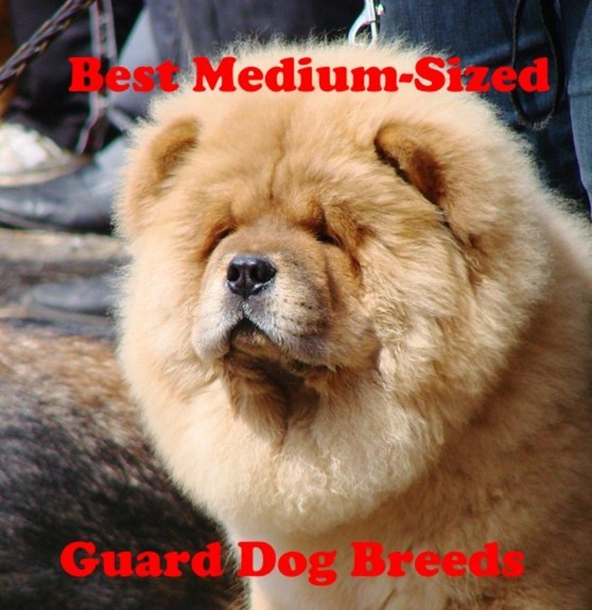 Many medium-sized dog breeds make good guard dogs.