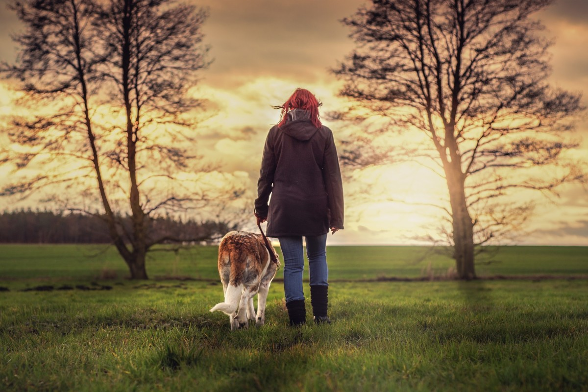 How to Promote a Dog Walking Business