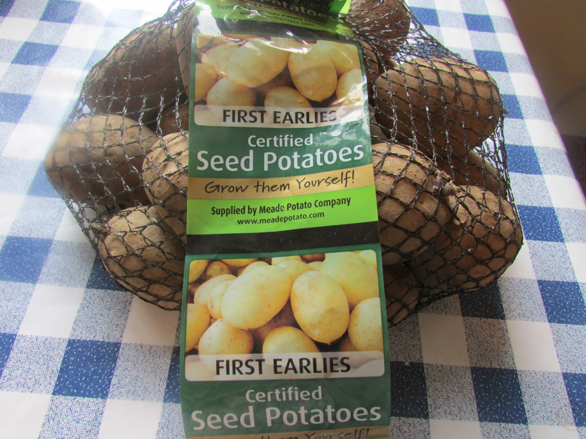 When to plant  First Early Seed Potatoes