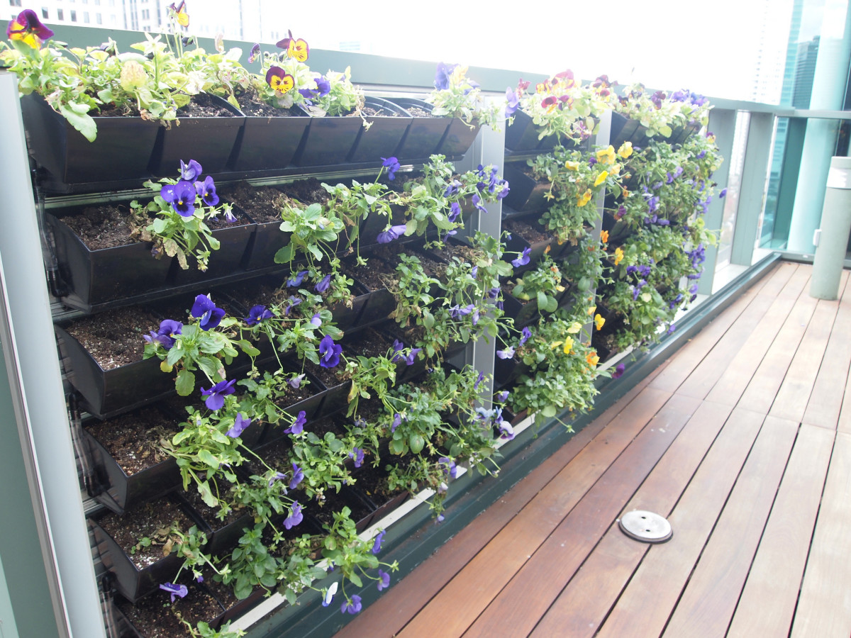 Growing a deck balcony or patio vegetable garden dengarden for Balcony vertical garden
