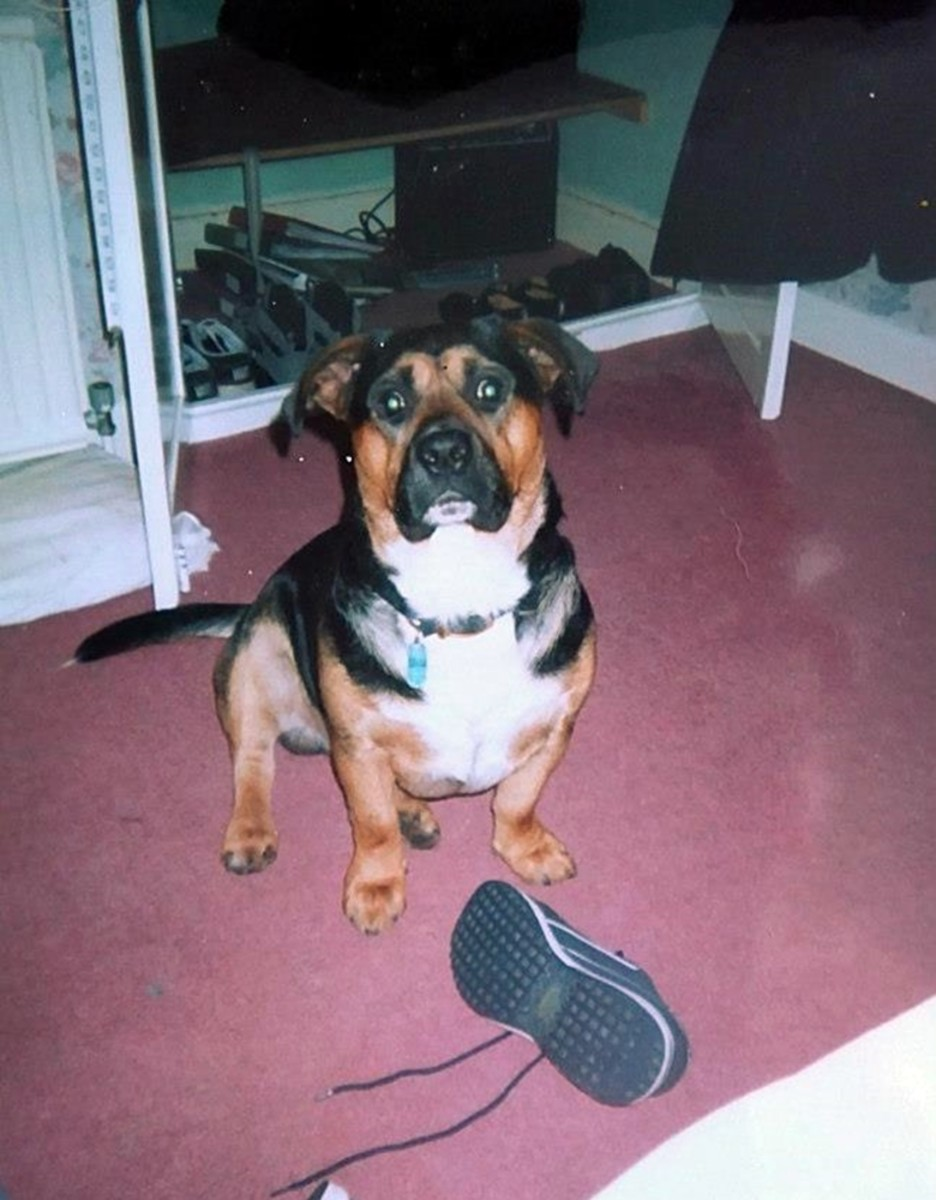 Buster my rescue dog in his youth.