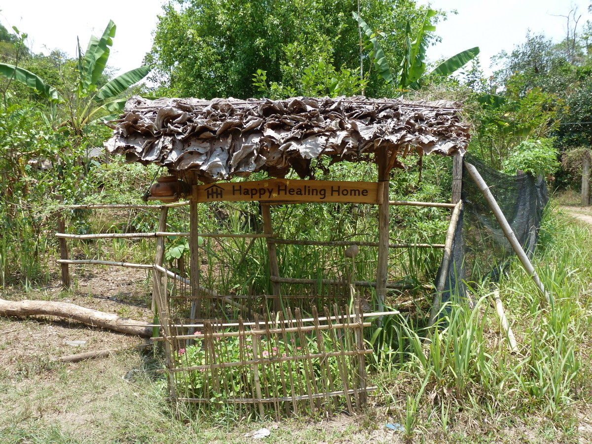 My Experience on a Self-Sustainable Farm in Thailand