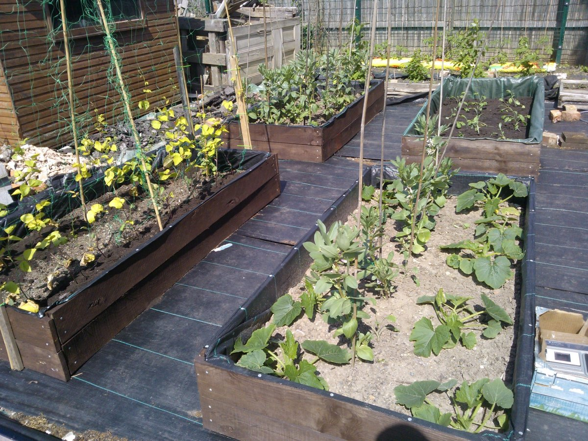 How to have a weed free low maintenance allotment dengarden for Weeds garden maintenance