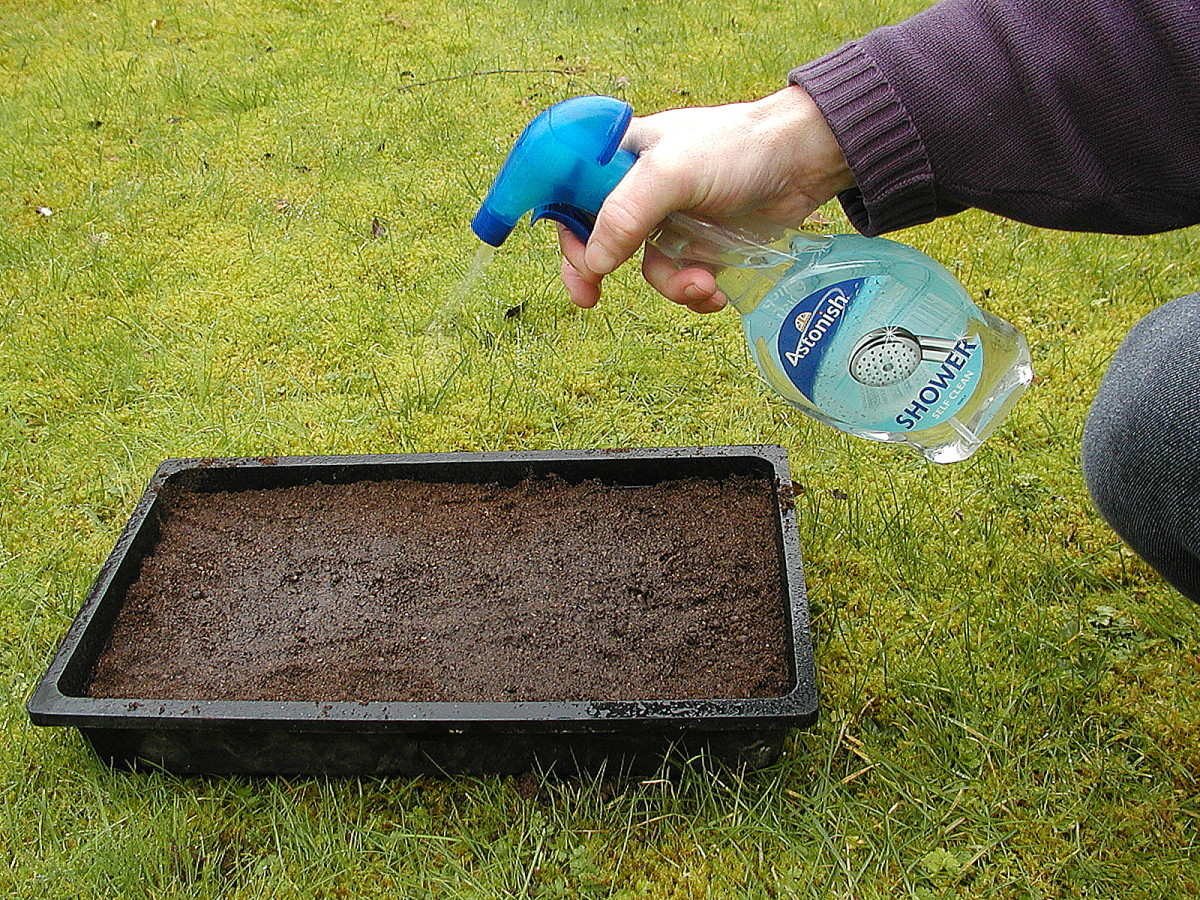Wet the surface of the soil with a mister. Mine was recycled and cleaned thoroughly.