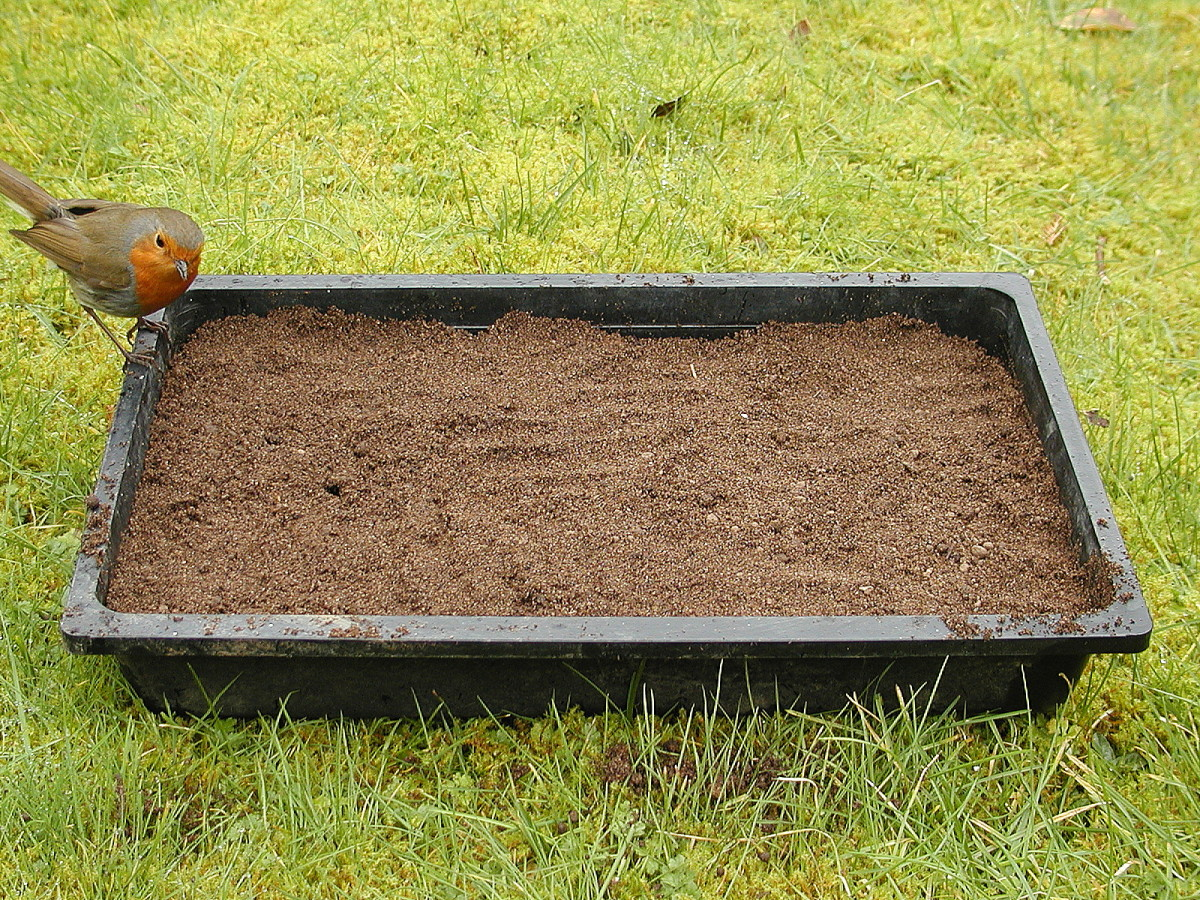 The seed tray doesn't need to be totally filled because seedlings will eventually be transplanted.