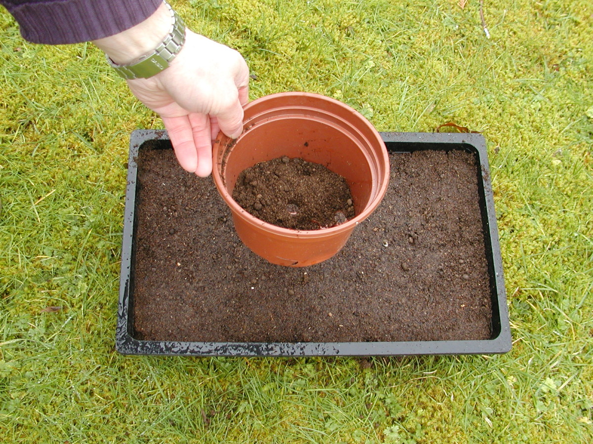 Larger seeds can be covered with a thin layer of compost. A flower pot acts like a pepper pot and is useful for sprinkling compost