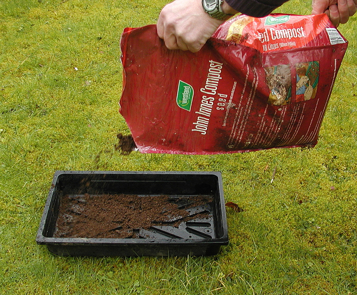 Fill the seed tray with seed compost.