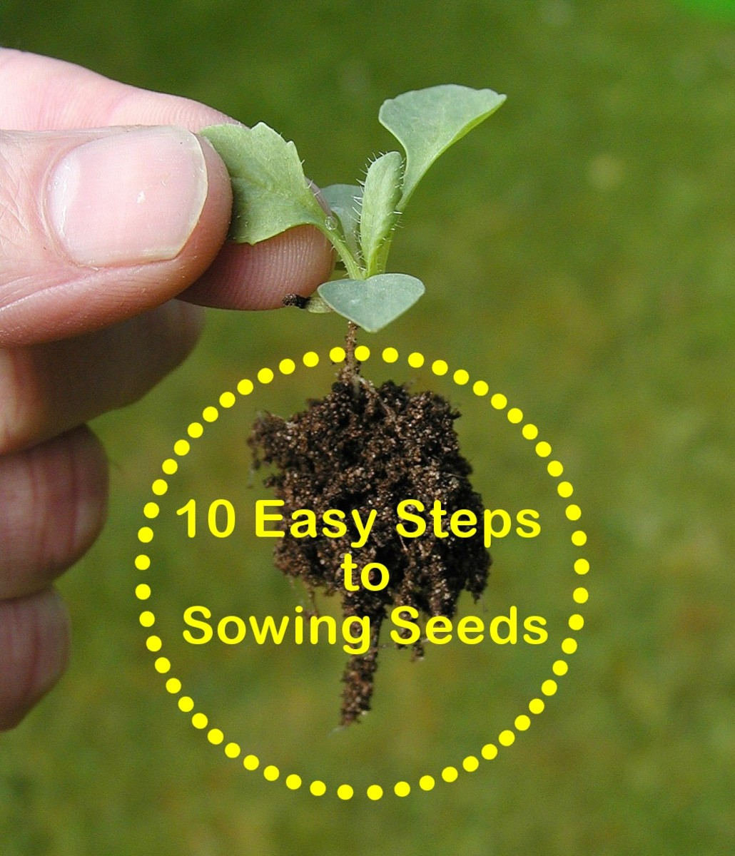 10 Easy Steps to Sowing Seeds - Gardening For Beginners