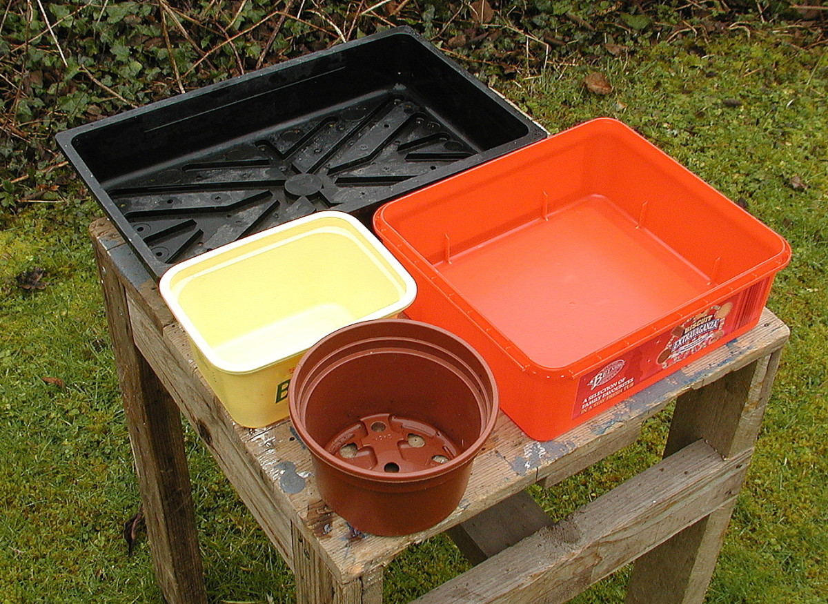 Many containers can be used for sowing seeds. Add holes for drainage.
