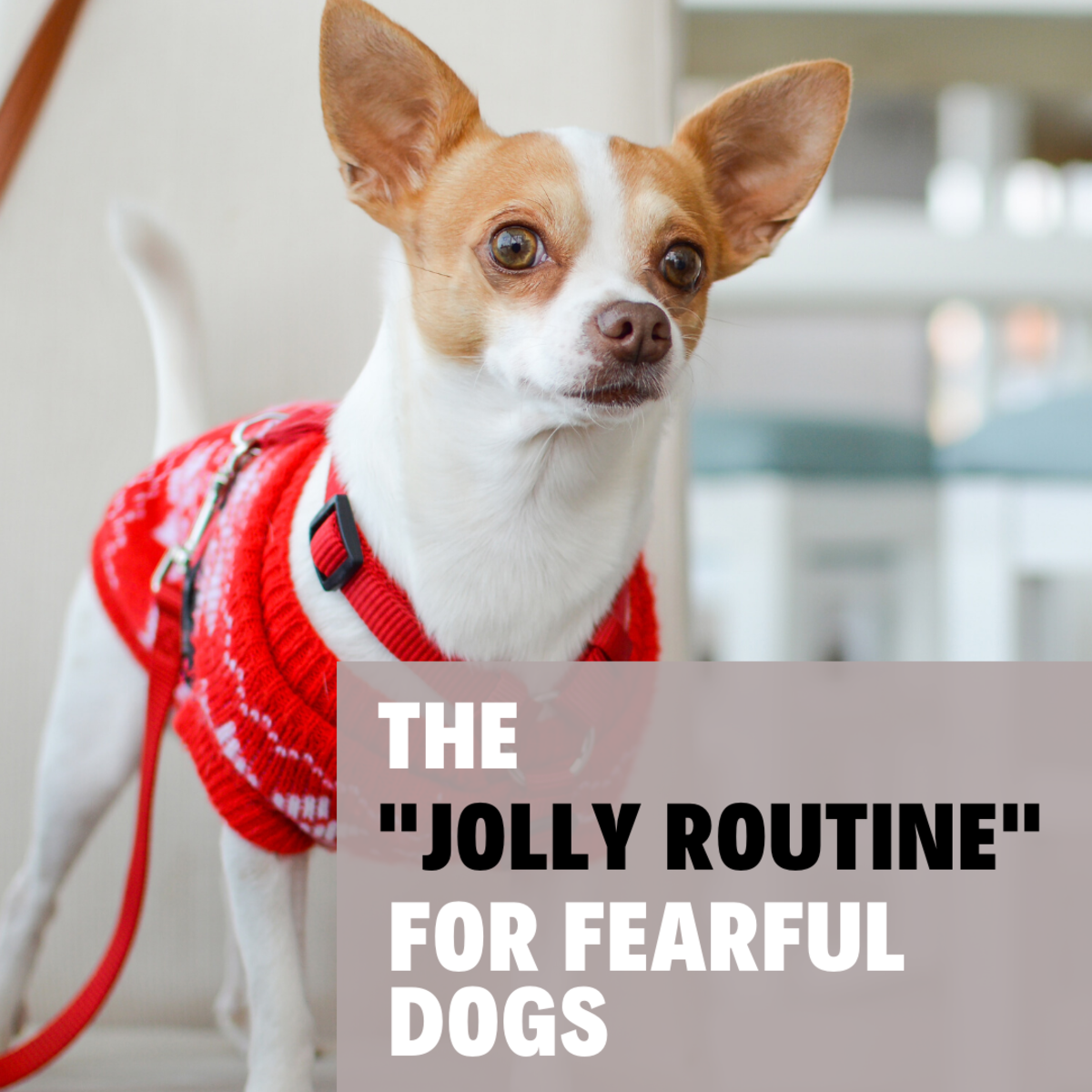 "How to Use the ""Jolly Routine"" for Fearful Dogs"