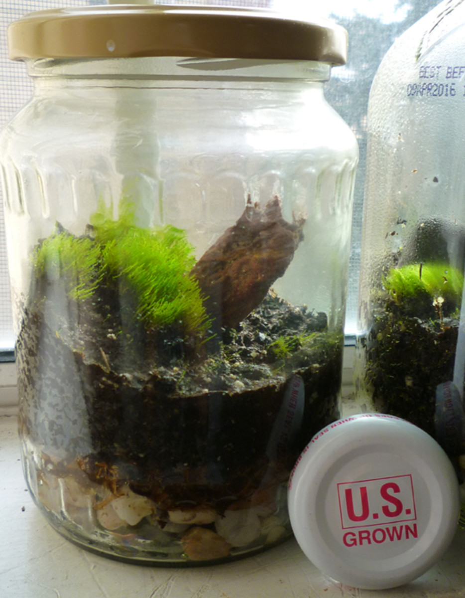 How to Make a Terrarium in a Jar