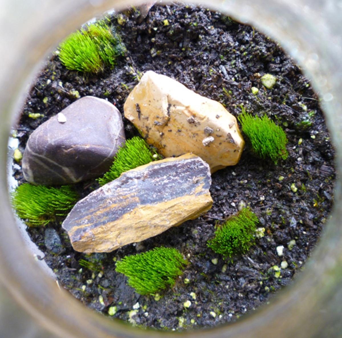 how-to-make-a-terrarium-in-a-jar