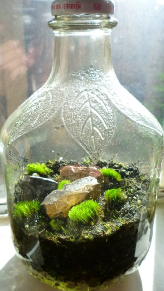 How To Make A Terrarium In A Jar Dengarden Home And Garden