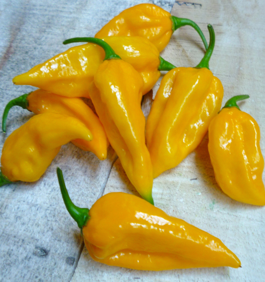 Fatalii Peppers. Reaching over 300,000+ Scoville Units, these are some seriously hot chilies!