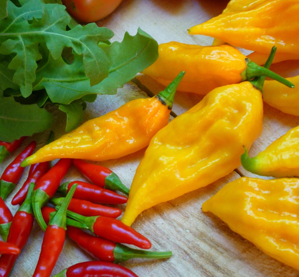 Fatalii peppers harvested summer 2013.