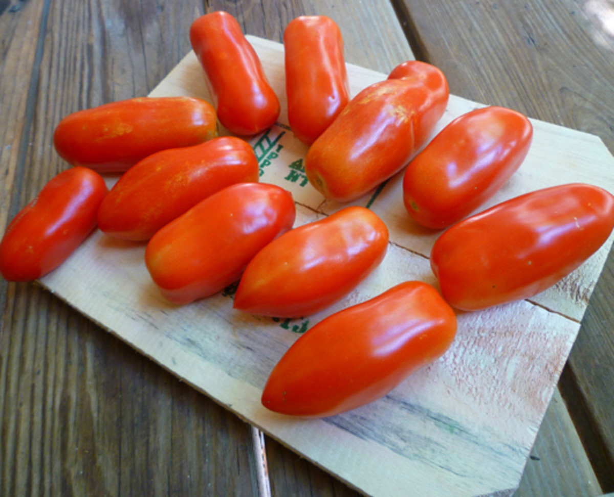 San Marzano tomatoes harvested from the patio. These container-grown tomatoes were only a small fraction of the total tomatoes harvested!
