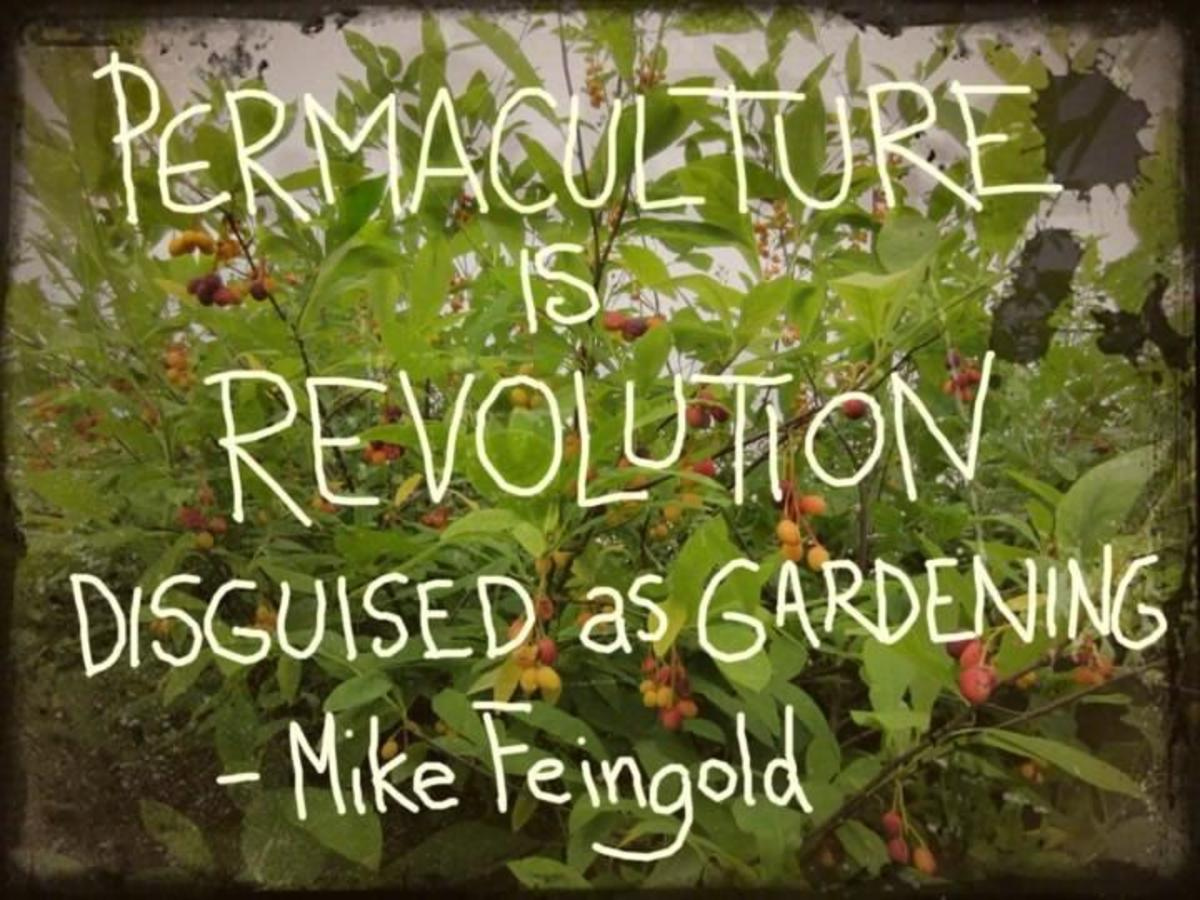 Permaculture is revolution disguised as gardening.