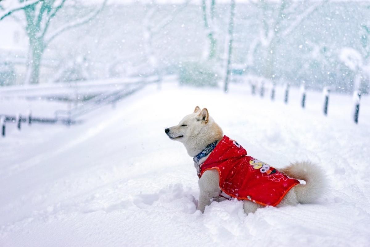 Snow transforms familiar landscapes into white wonderlands.