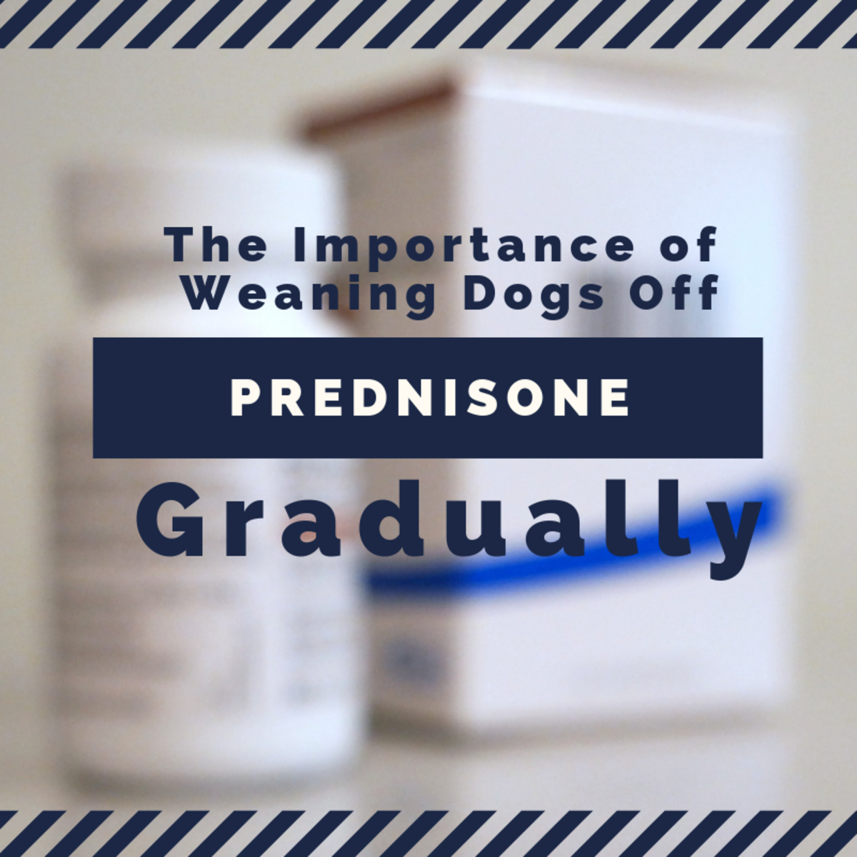 How to Wean a Dog Off Prednisone (or Prednisolone, in the UK)