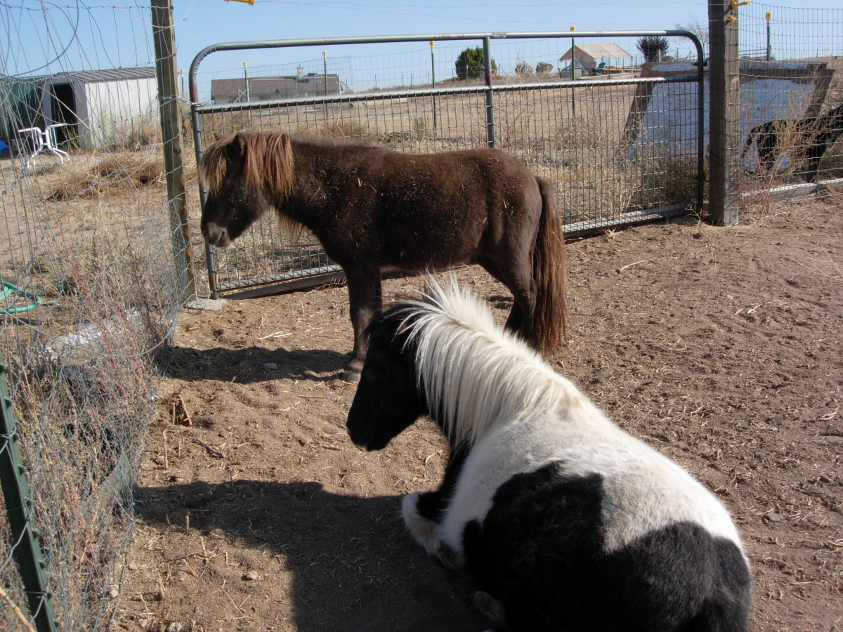 Hitching My Miniature Horse: The Easy Entry Cart