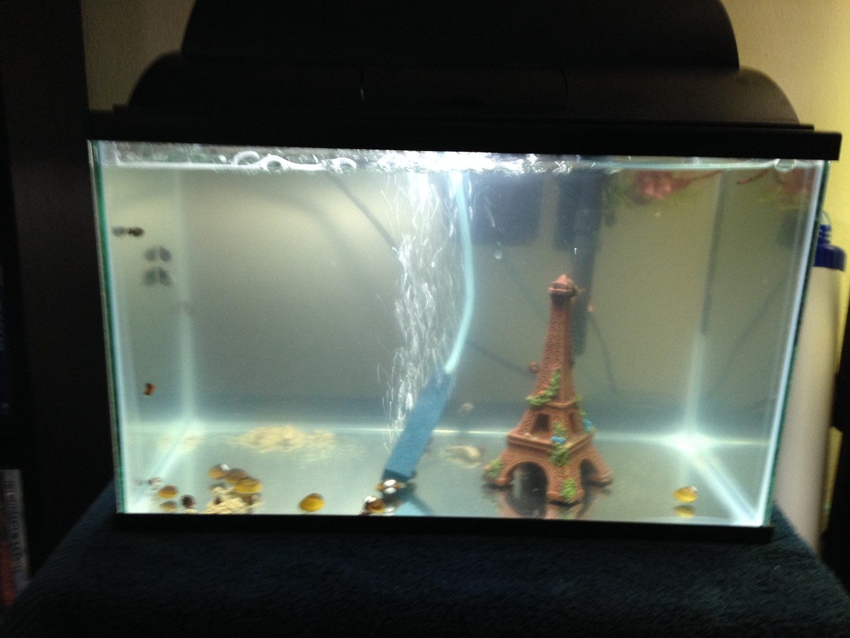 This is a snail tank used to house snails in an effort to create a self-populating culture.