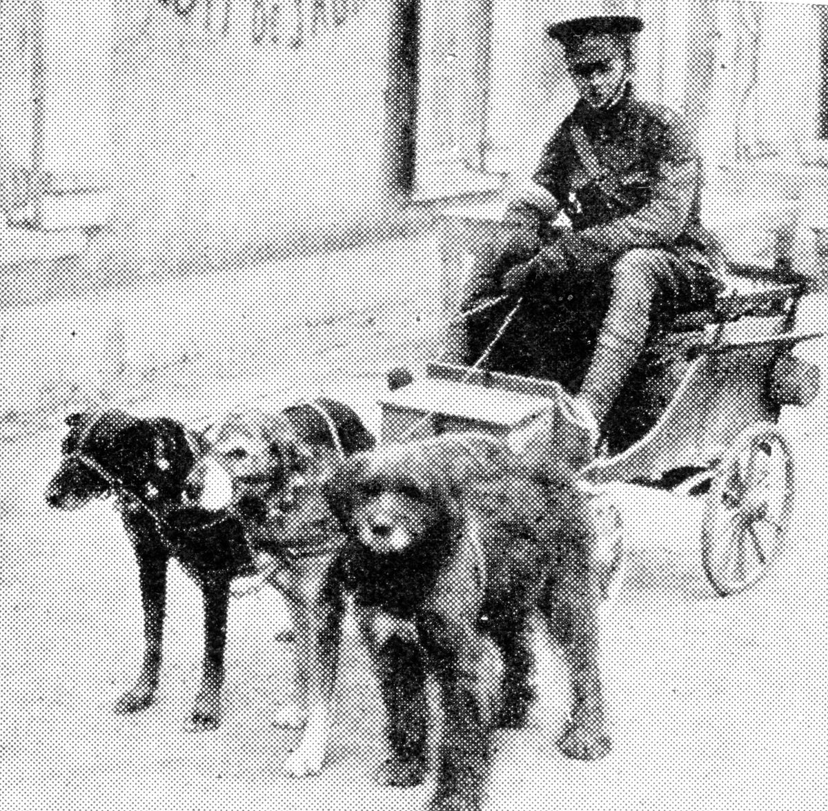 "To the British the term "" dog-cart"" designated a trap with a box arrangement behind, but in Belgium the real dog-cart was in common use, though a British soldier driving one was a novelty."
