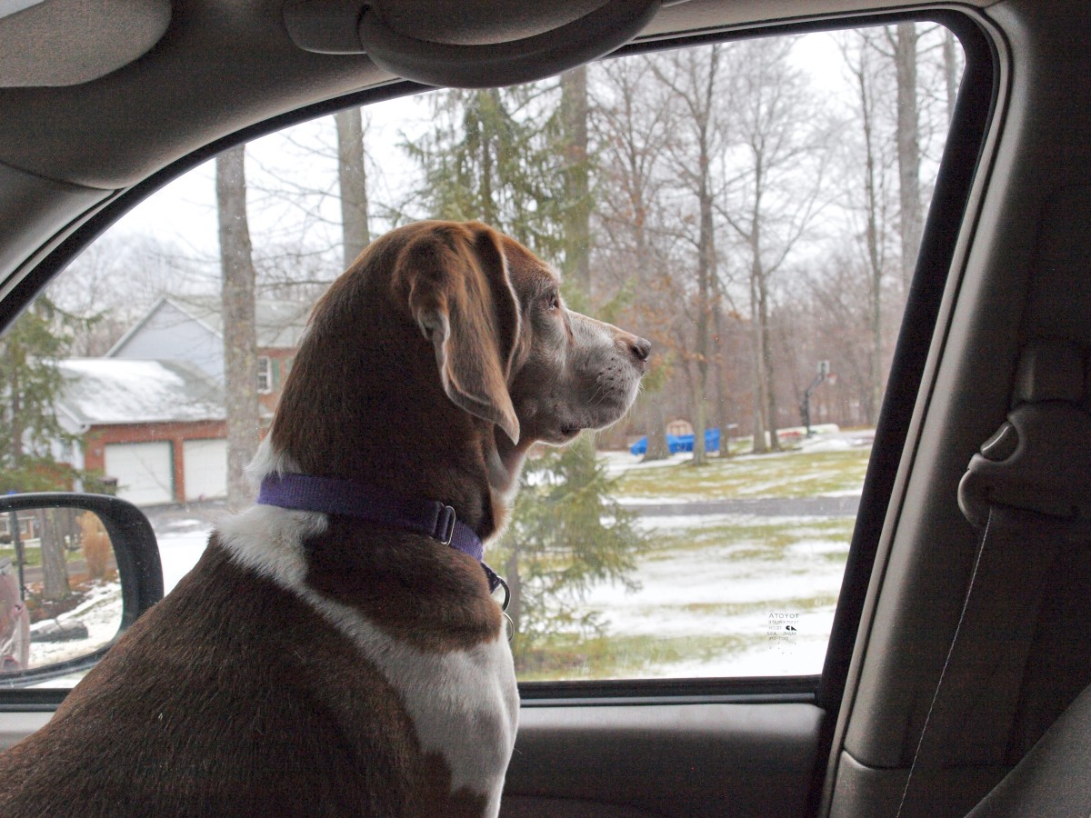 how-to-train-dog-to-jump-into-car