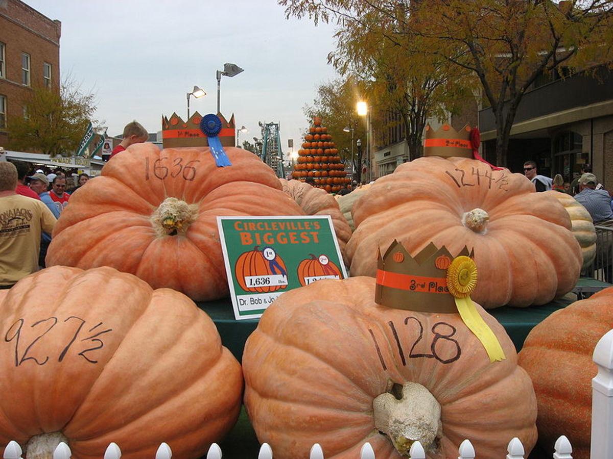 how-to-grow-giant-pumpkins