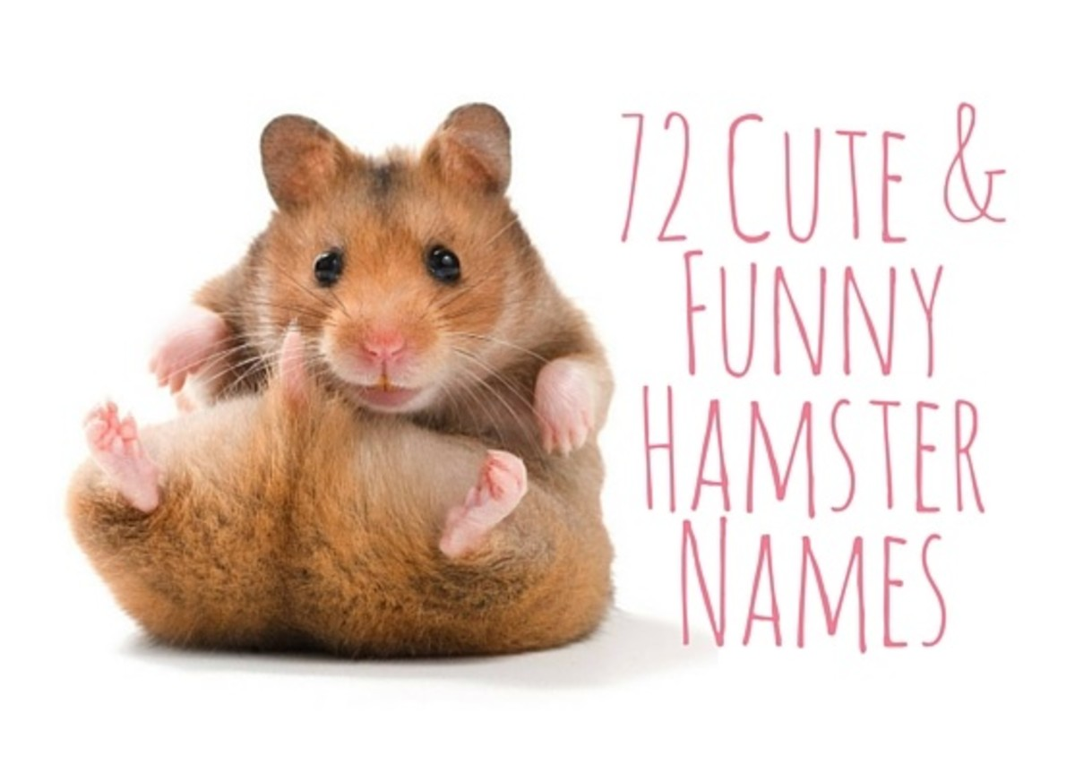 72 Cute and Funny Hamster Names for Males and Females