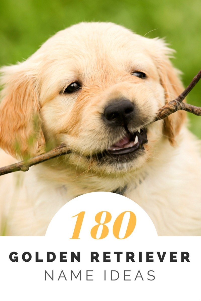 Over 180 Golden Retriever Names for Your Beloved Pup