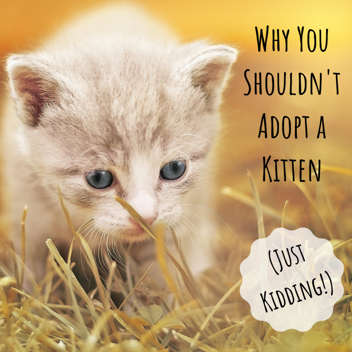 Find out some things you need to know before you consider adopting a kitten—tongue firmly in cheek.