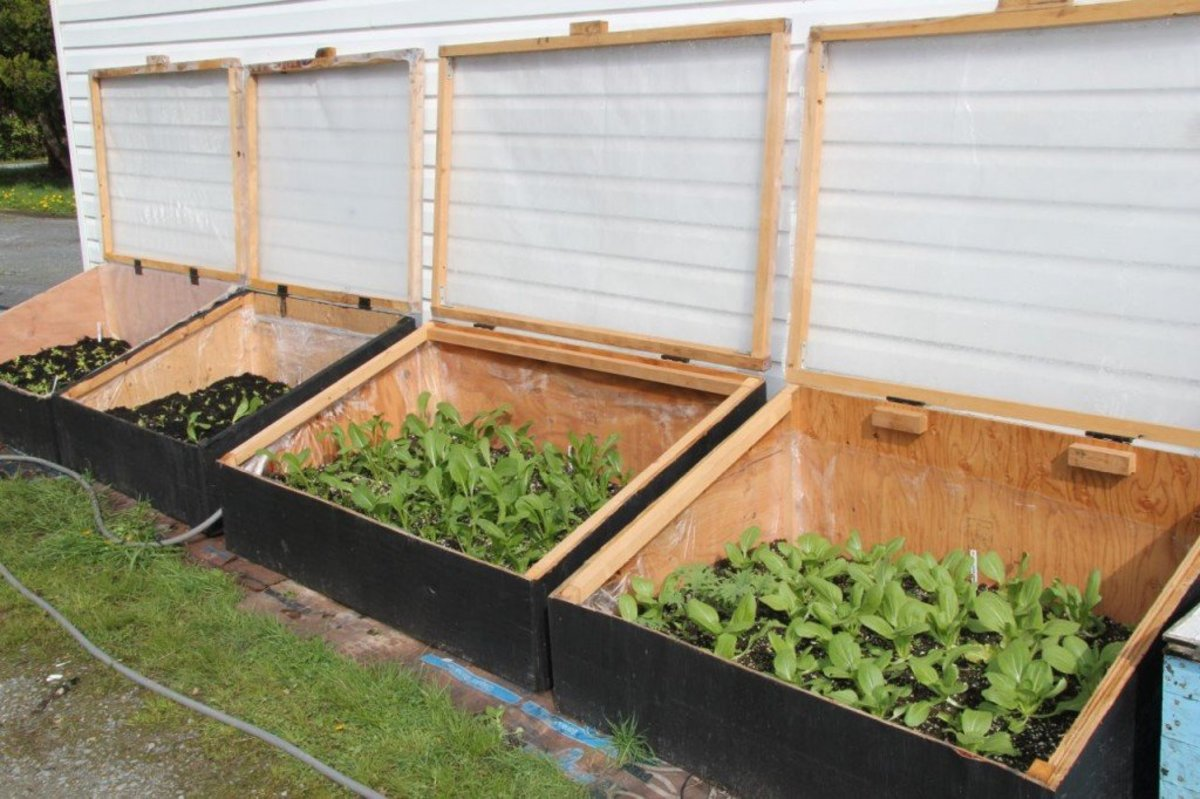 How to Build Cold Frames for Your Garden