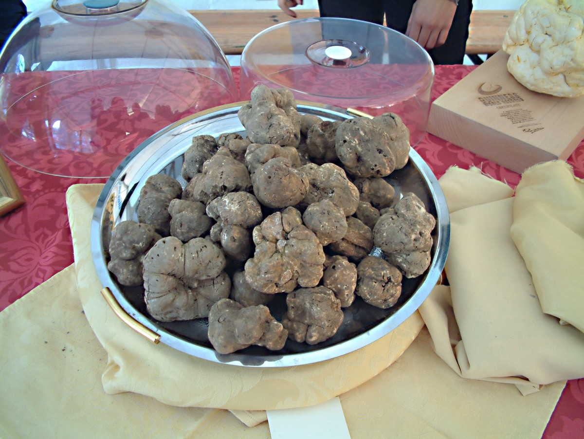 White truffles from Croatia; truffles are made by fungi that form mycorrhizae on the roots of certain types of trees