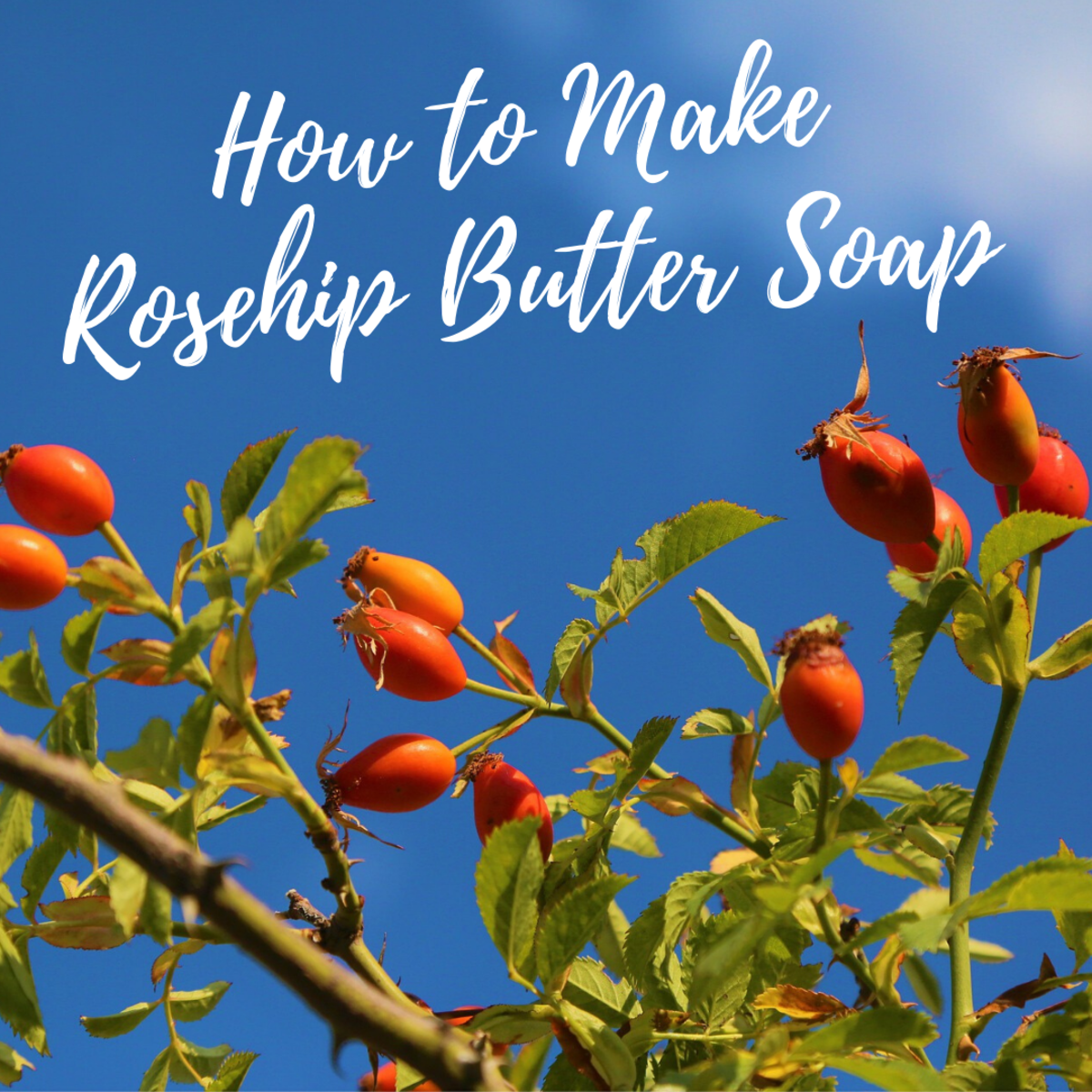 How to Make Rosehip Butter Soap for Skin With Rosacea