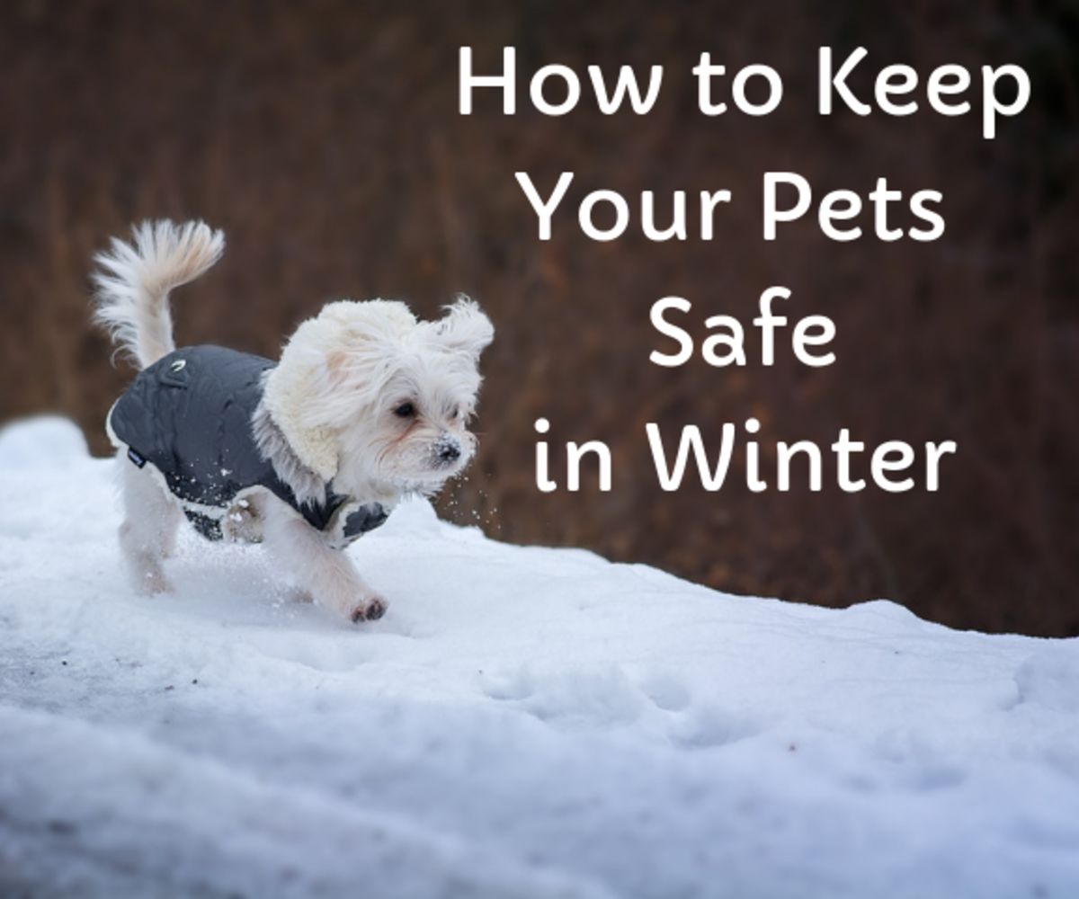 Tips for keeping your dogs and cats warm and safe when the weather gets cold.