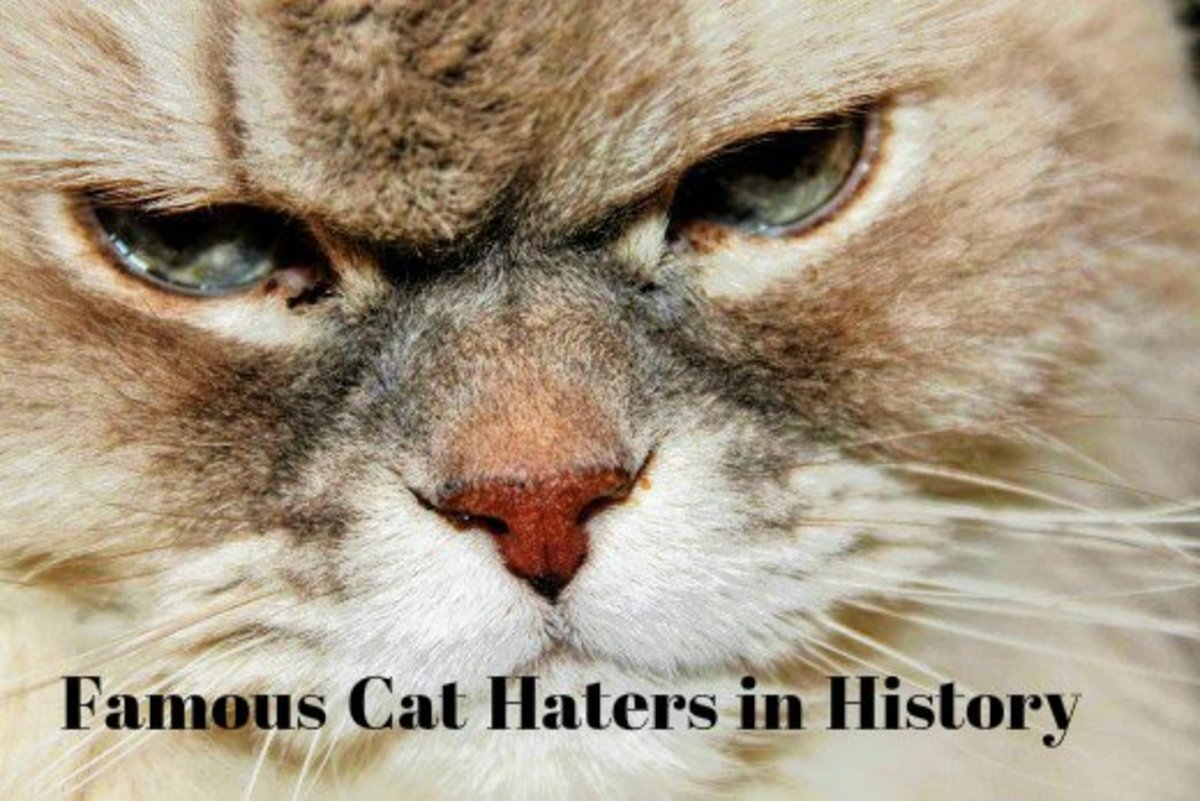 Ailurophobia is the extreme and irrational fear of cats.  However, there are also people who are just plain evil and seek to do cats harm.  Cat haters in history have long been intimidated by the Almighty Cat's self-assurance.