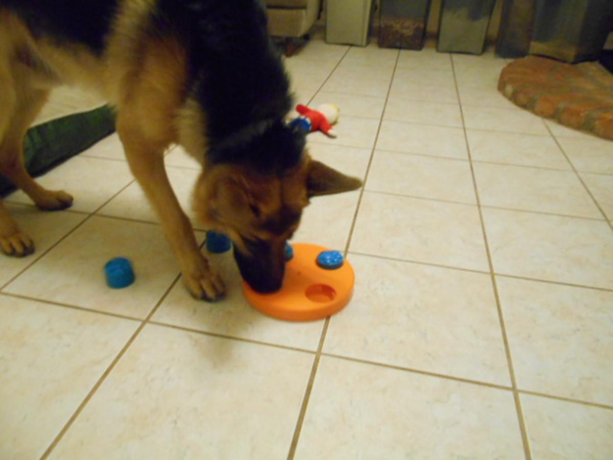 Dog foraging behavior