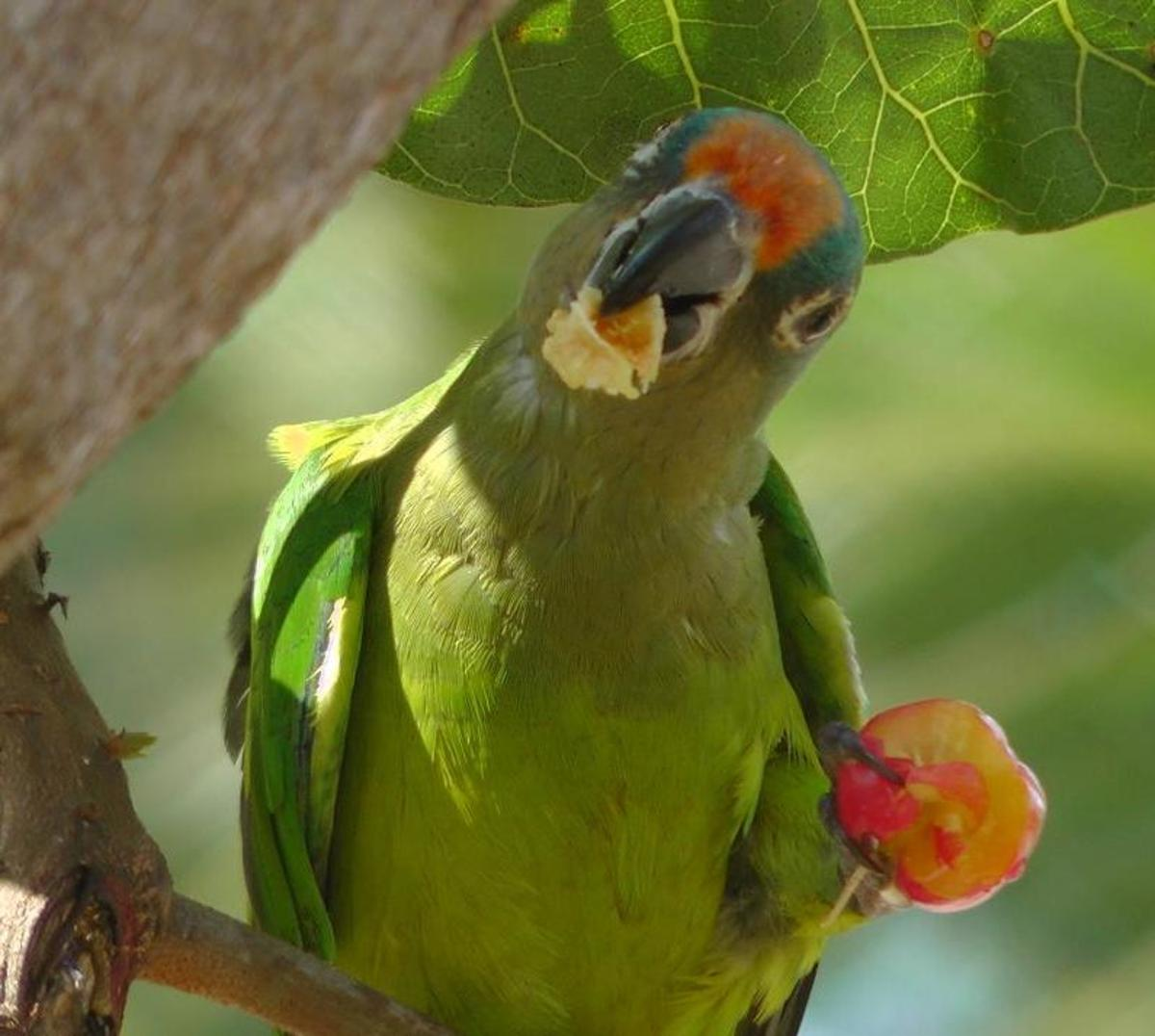 Parrots that exercise also like to eat healthy.