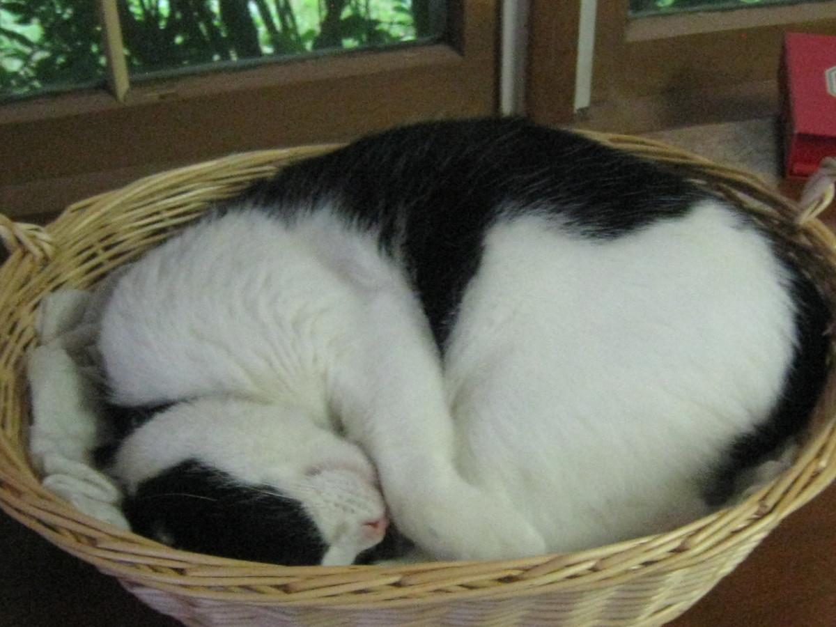 Nighty night, sleep tight!